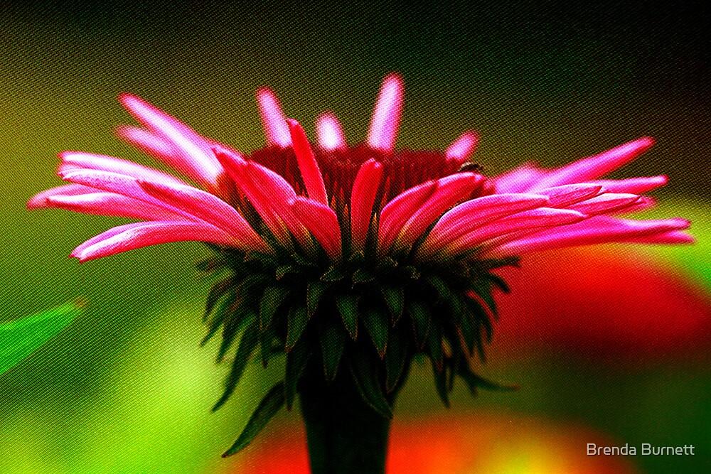 Silky Cone Flower by Brenda Burnett