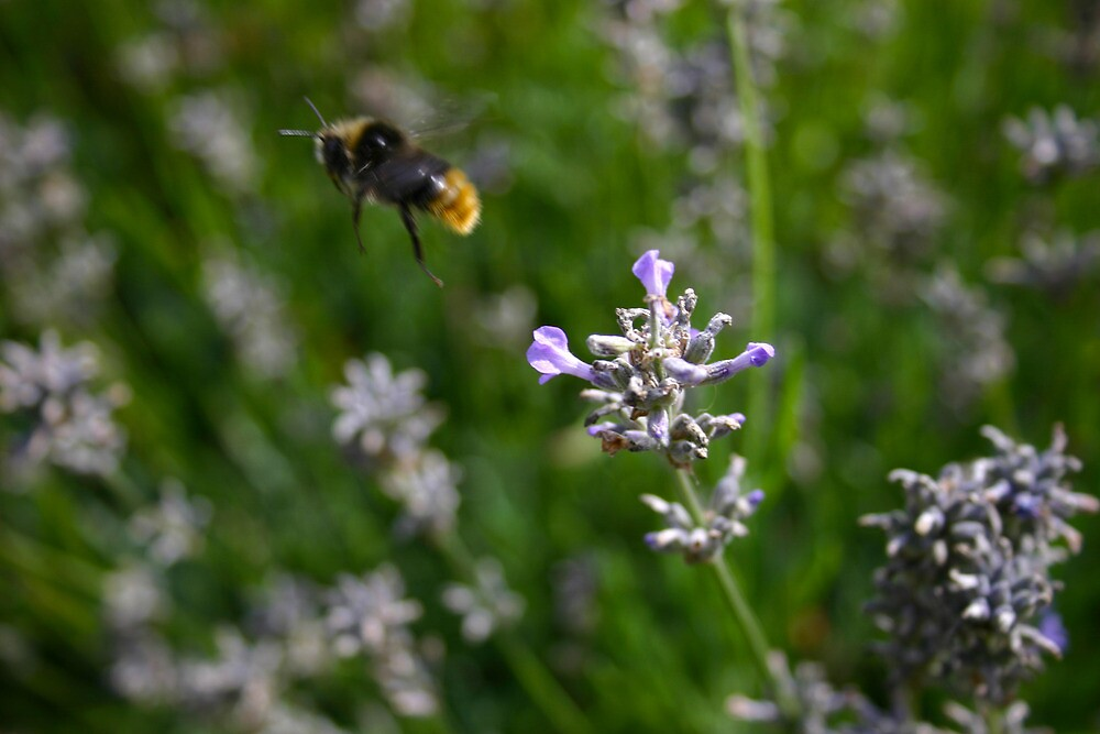 Bee in motion by James Taylor