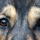 to the soul of a german shepherd by kremphoto