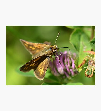 Skipper Photographic Print