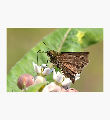 Skipper drinking Photographic Print