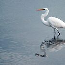 Egret reflections by Jenny Dean