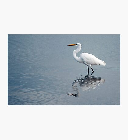 Egret reflections Photographic Print
