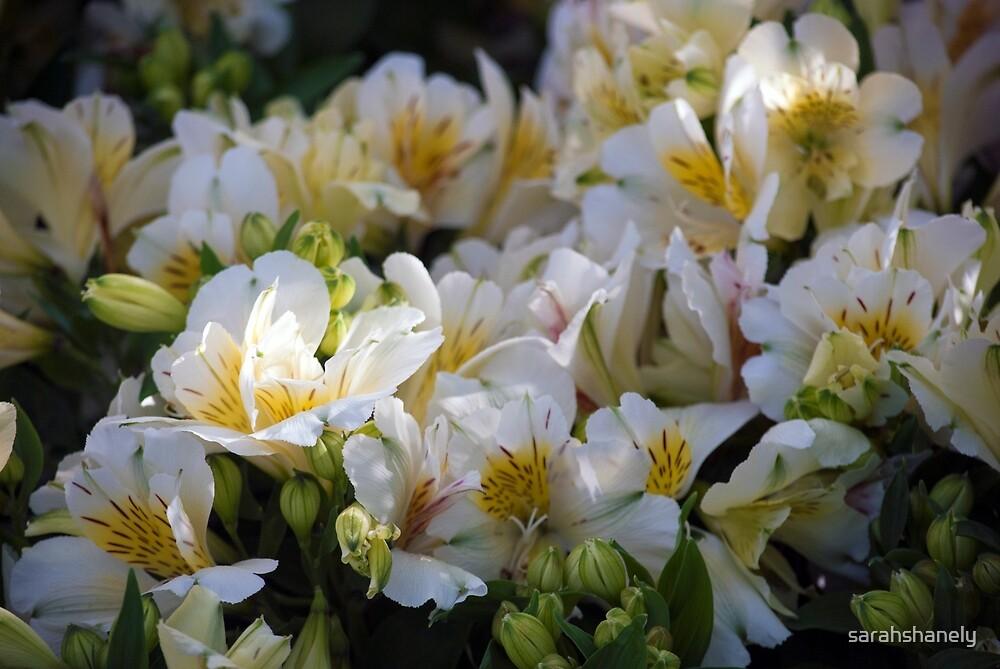 Longwood Gardens - Spring Series 64 by sarahshanely