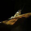Grasshopper Study by KatsEyePhoto