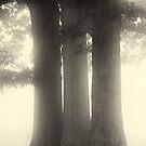 Pillar of Oak by Michael  Dreese