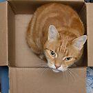"Angus: ""I do love boxes!"" by Andrew Trevor-Jones"