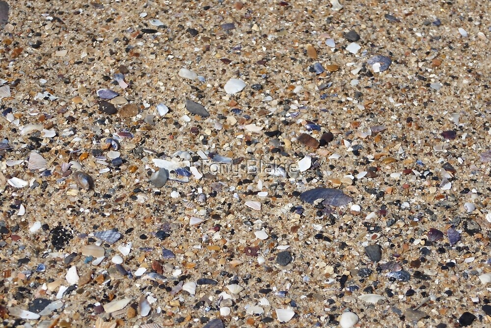Shells and pebbles by Tony Blakie