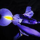 Iris Princess by Mistyarts