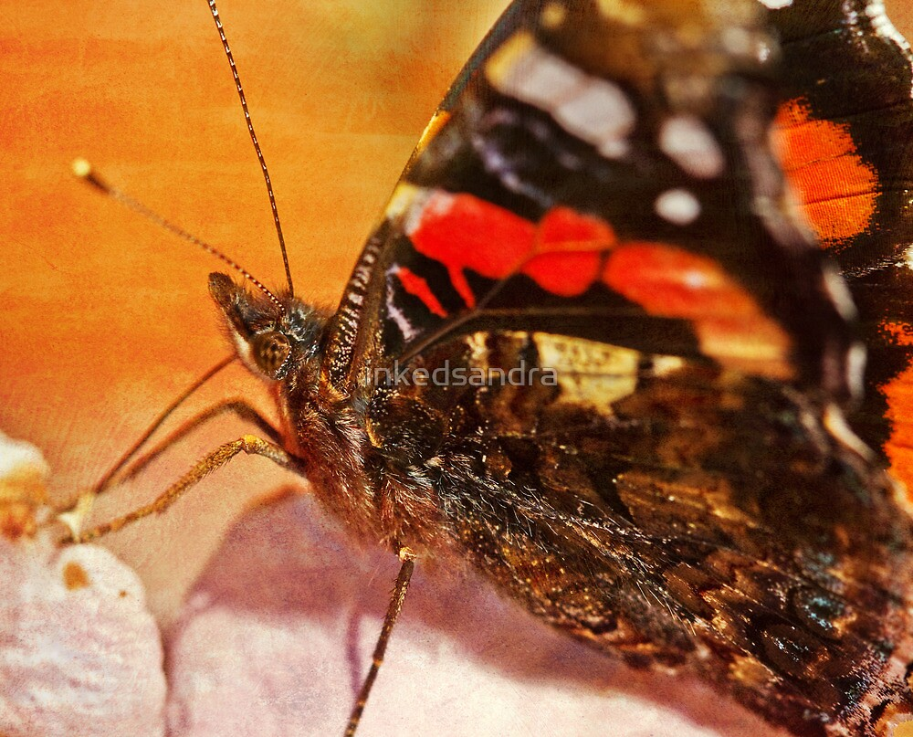 Madame Butterfly by inkedsandra