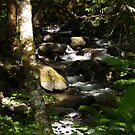 Little Falls On The Clackamas by kimmers64