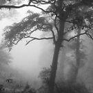 Misty Trees by Rachel Doherty