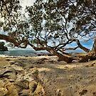 Waimama Bay Twisted Pohutukawas by Ken Wright