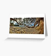 Waimama Bay Twisted Pohutukawas Greeting Card