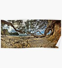 Waimama Bay Twisted Pohutukawas Poster