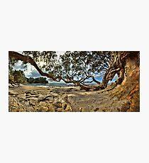 Waimama Bay Twisted Pohutukawas Photographic Print