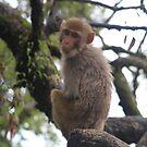 Monkey by Rachel Doherty