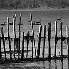 ruralscapes #118, behind fences by stickelsimages