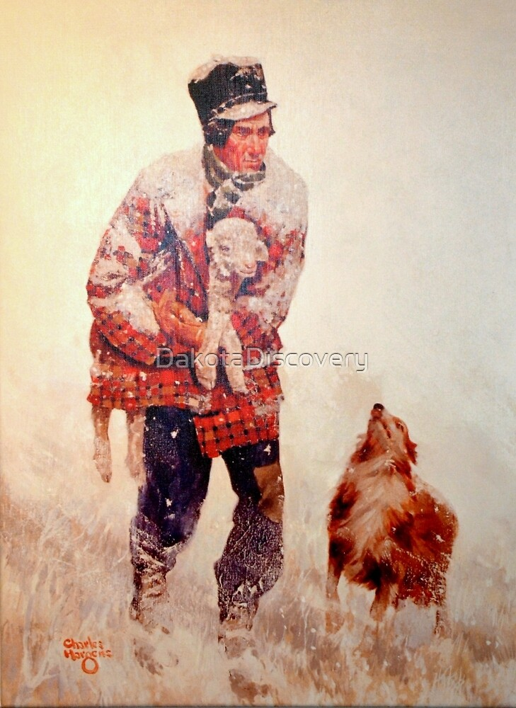 Rescued Lamb by DakotaDiscovery