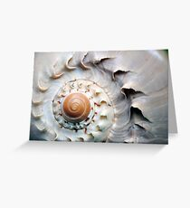 Snaggle-Toothed Shell Greeting Card