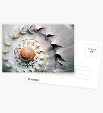 Snaggle-Toothed Shell Postcards