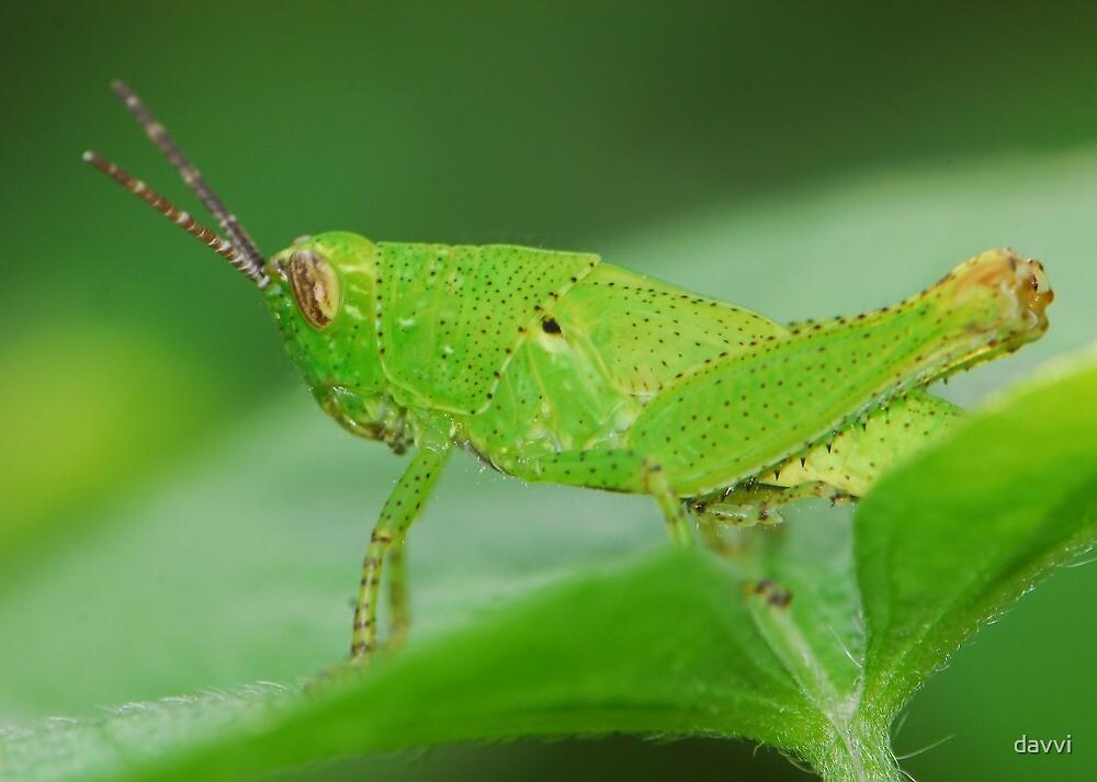 grasshopper by davvi