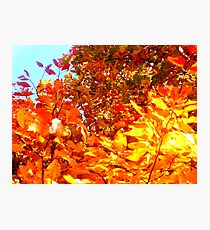 Colors Run Deep Photographic Print