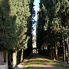 Tuscany by sezice