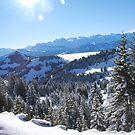 Snowy Trees by sezice