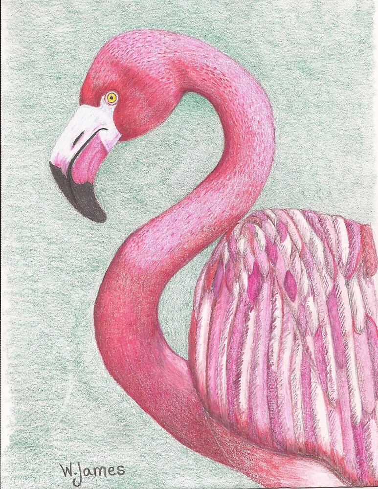 Pink Flamingo by Wanda Teston