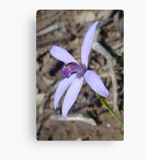 Silky Blue Orchid Canvas Print