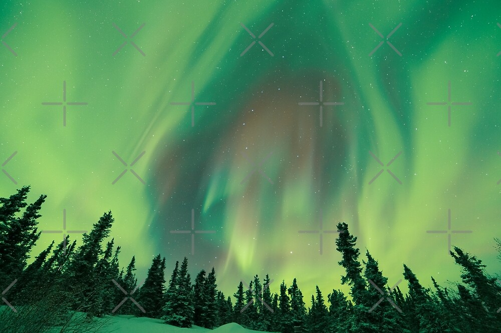 Boreal Forest and the Aurora by .Aaron Lojewski