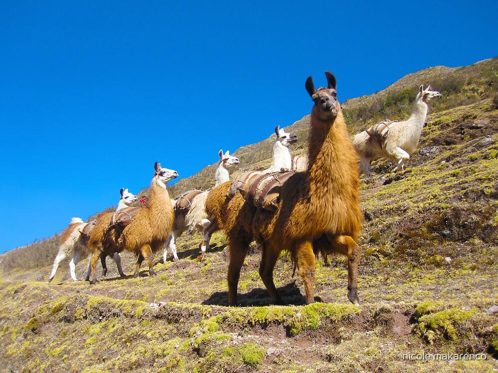 llamas rule the road  by nicole makarenco