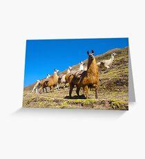 llamas rule the road  Greeting Card