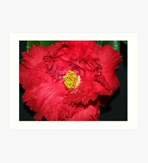 Red Camellia, Red Frilly   Art Print
