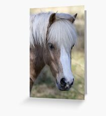 Sweet William  ( BILLY ) Greeting Card