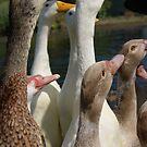 eager ducks! Feed me!!!!! by monkeyferret