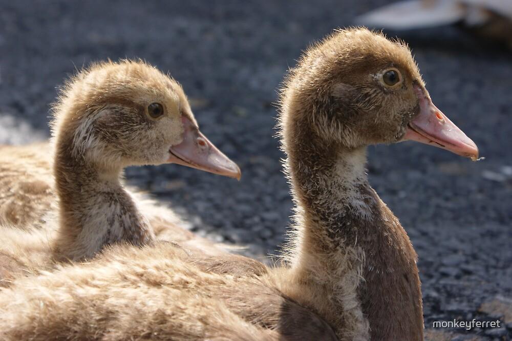 Muscovy Ducklings by monkeyferret