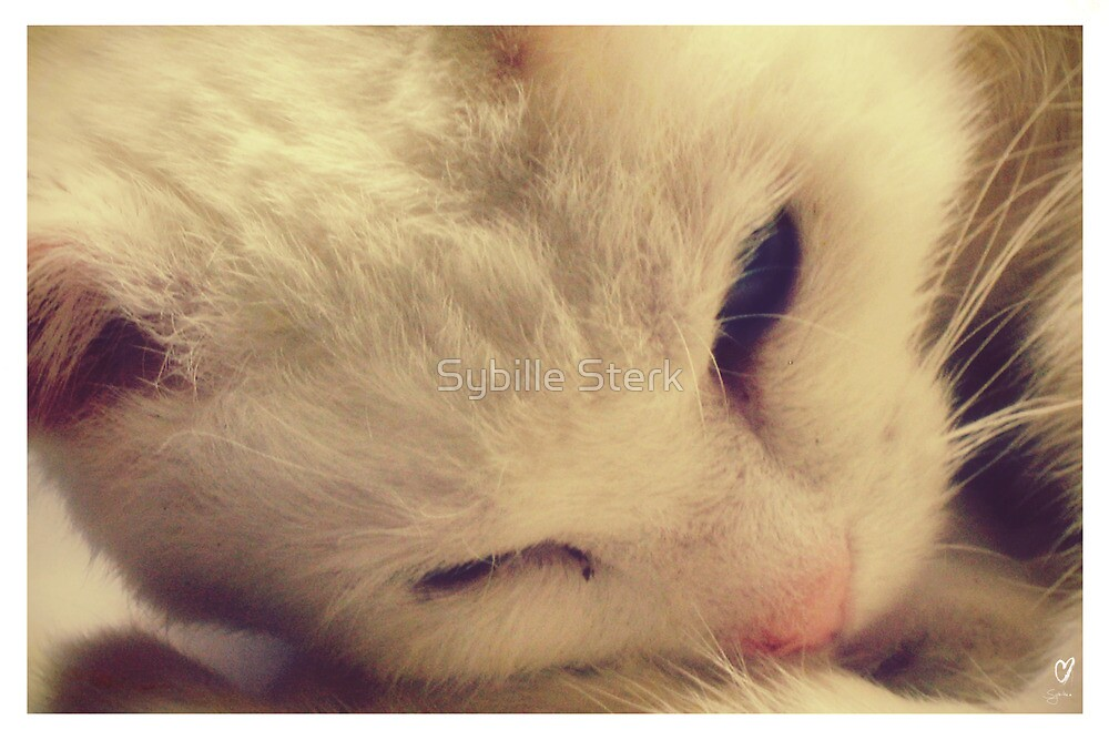 A Very Special Cat by Sybille Sterk