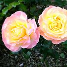 Beauty of the Roses by Barry Norton
