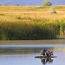 Ninepipe Wildlife Refuge in the early morning (3 of 3) by amontanaview