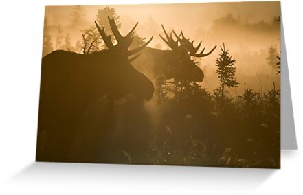 A Foggy Morning by Tim Grams