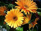 Yellow Gerbera Daisies by FrankieCat