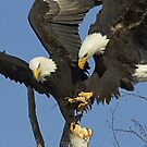 The Contested Perch by Tim Grams