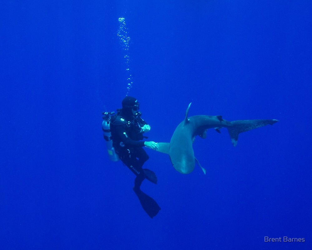 Formal Introductions With An Oceanic White Tip Shark by Brent Barnes