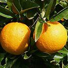 Oranges by Jenny Brice