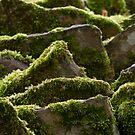 mossy rockscape by picketty