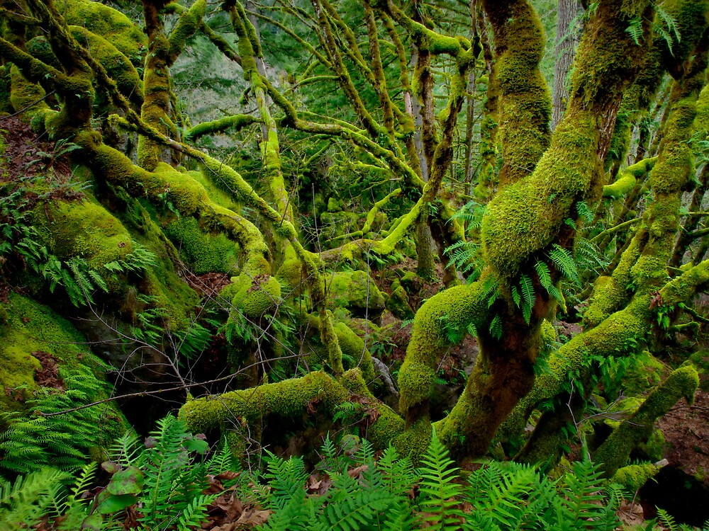 A Green Place by Charles & Patricia   Harkins ~ Picture Oregon