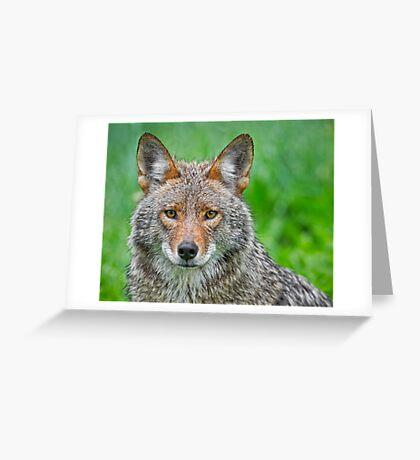 Coyote pretty Greeting Card
