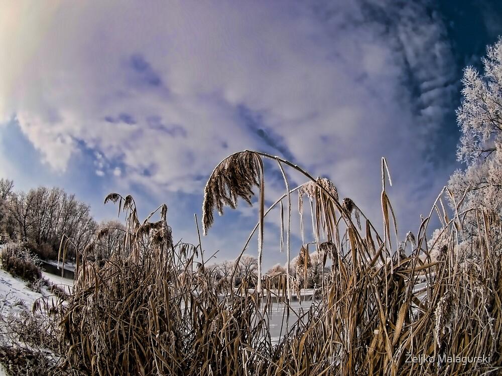 Frozen Paradise by Željko Malagurski